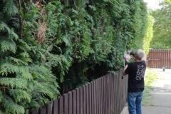 každoroční údržba živých plotů
